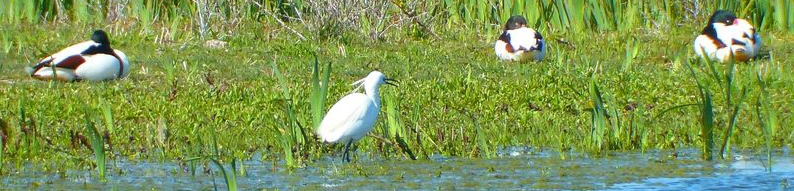 Dans la réserve naturelle nationale de la baie de Canche